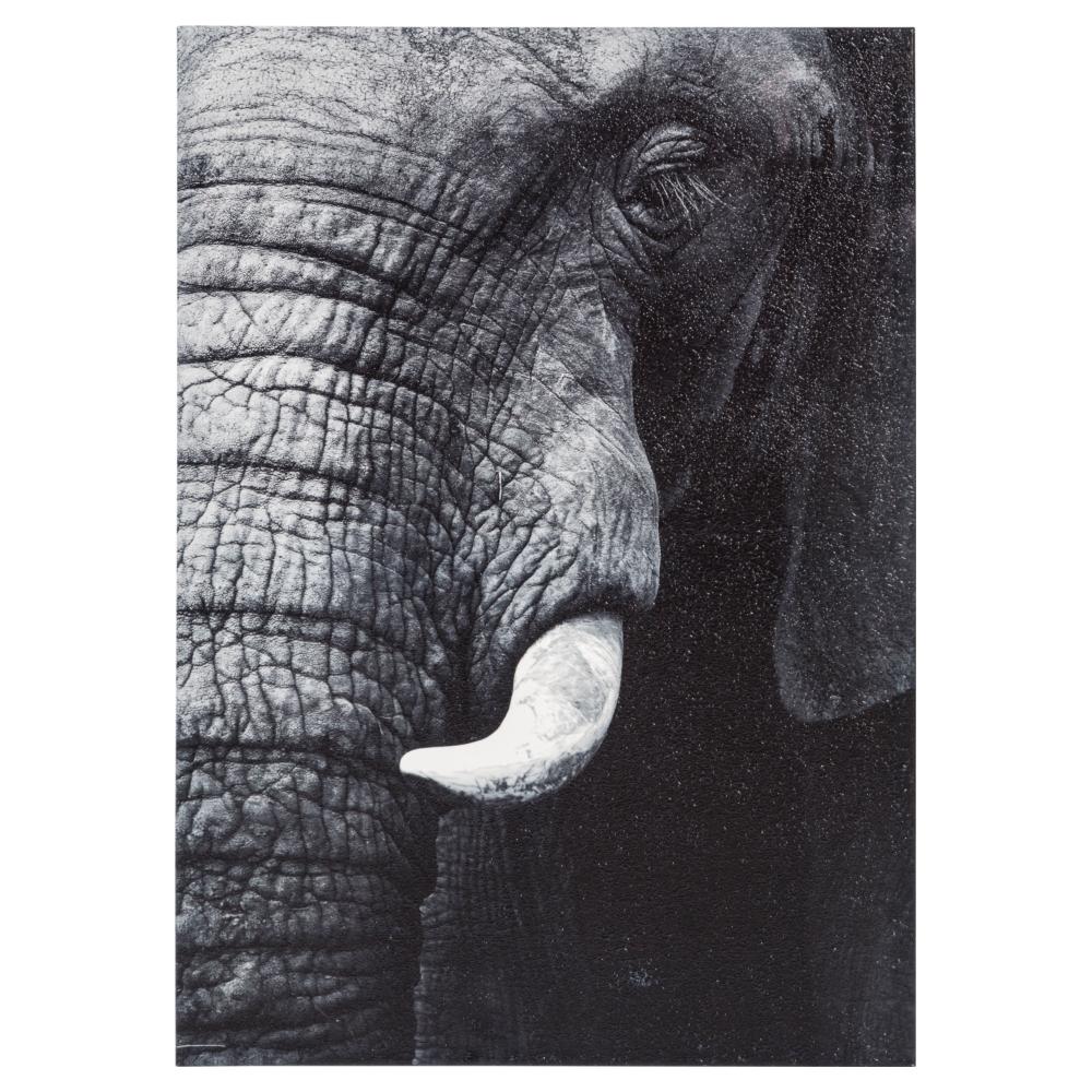 ELEPHANT FACE PANO