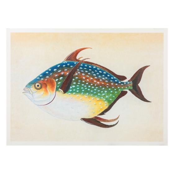 OPAH FISH PANO 50X70 CM