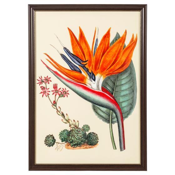 BIRD OF PARADISE PANO 50X70 CM