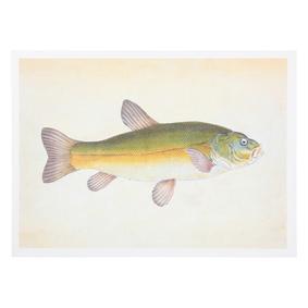 TINCA FISH PANO 50X70 CM