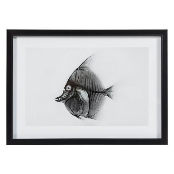 X-RAY FISH I 50X70 CM