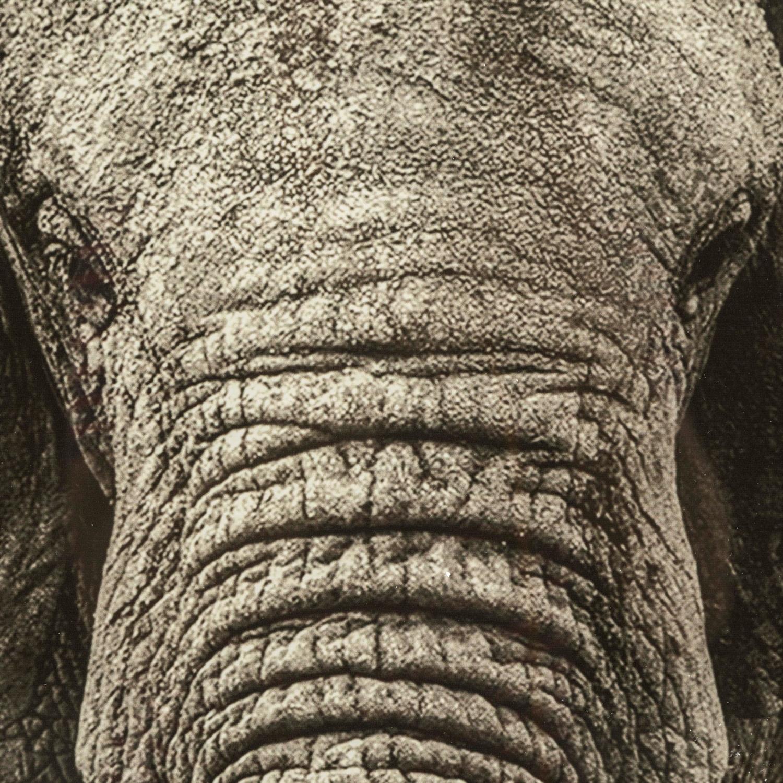ELEPHANT PANO 80X80 CM