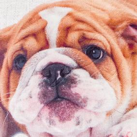 ENGLISH BULLDOG 45x45