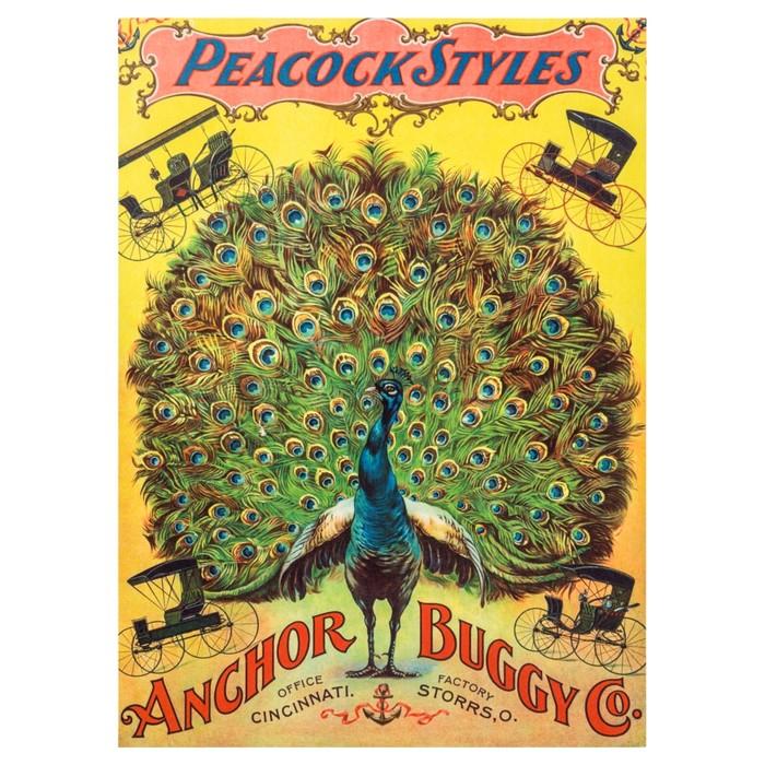 PEACOCK STYLES PANO 50X70 CM
